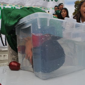 DOWN UNDER: Bobbing for apples was one of the highlights of the pep rally.
